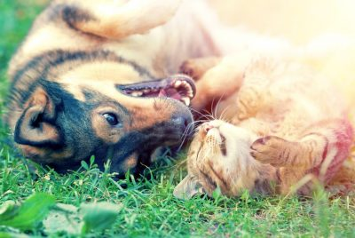 EMF Protection For Pets
